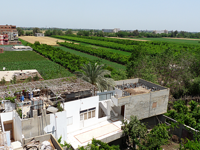 Our home in the heart of Egypt's Nile Delta. Credit: K. Vail